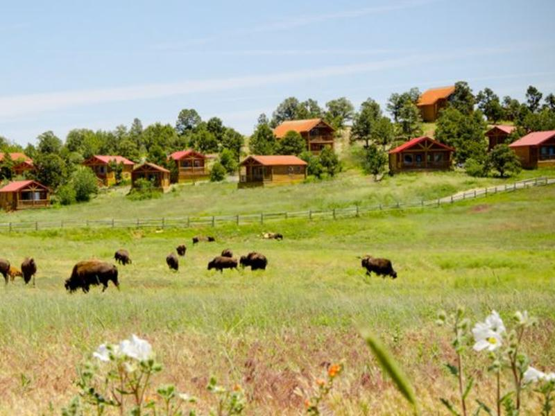 Zion Mountain Ranch sits in the high mountain of Zion National Park on a large buffalo meadow preserve