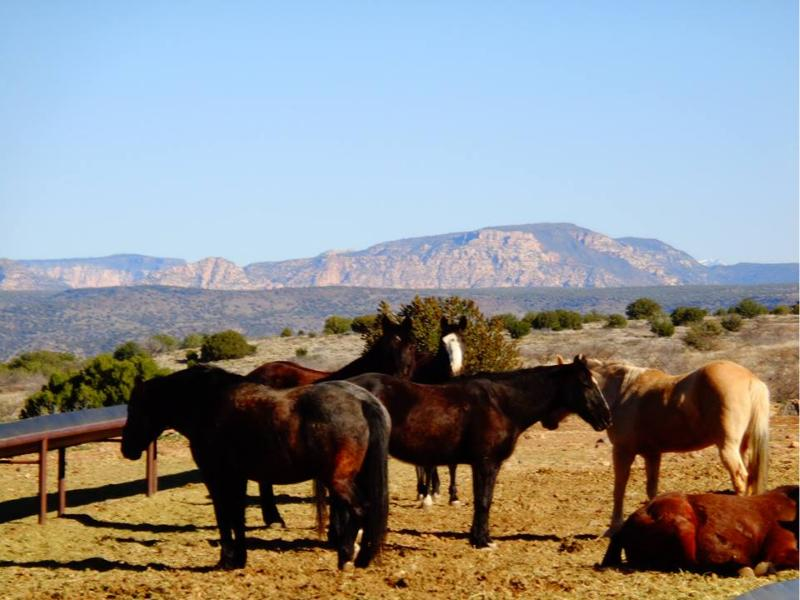 Arizona guest ranches arizona dude ranches texas guest for Sprucedale ranch