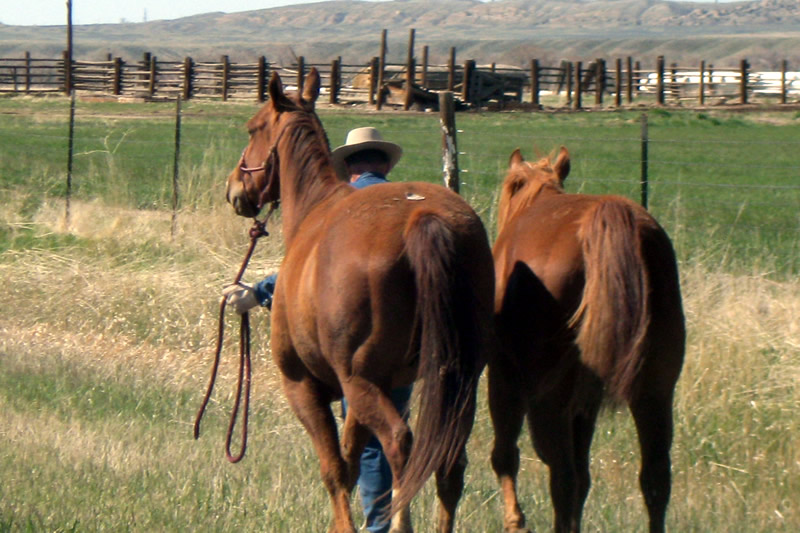 HorseWorks - Wyoming is a fabulous location with beautiful horses.
