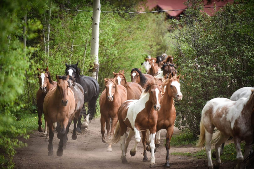 Horses at Drowsy Water Ranch in Granby, Colorado