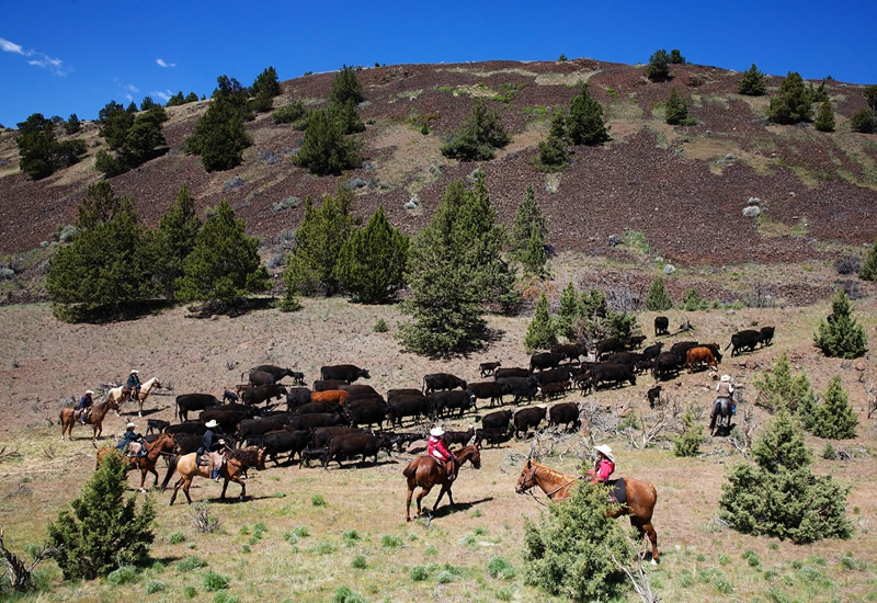 Enjoy a Cattle Drive at Wilson Ranches Retreat in Fossil, Oregon