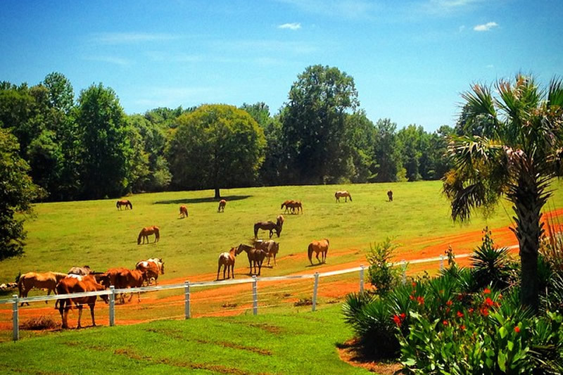 Horses at Southern Cross Guest Ranch in Georgia