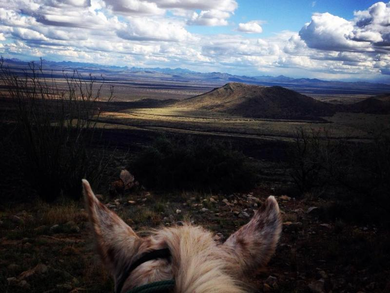 Horseback riding in the Arizona Sonoran Desert with Elkhorn Ranch