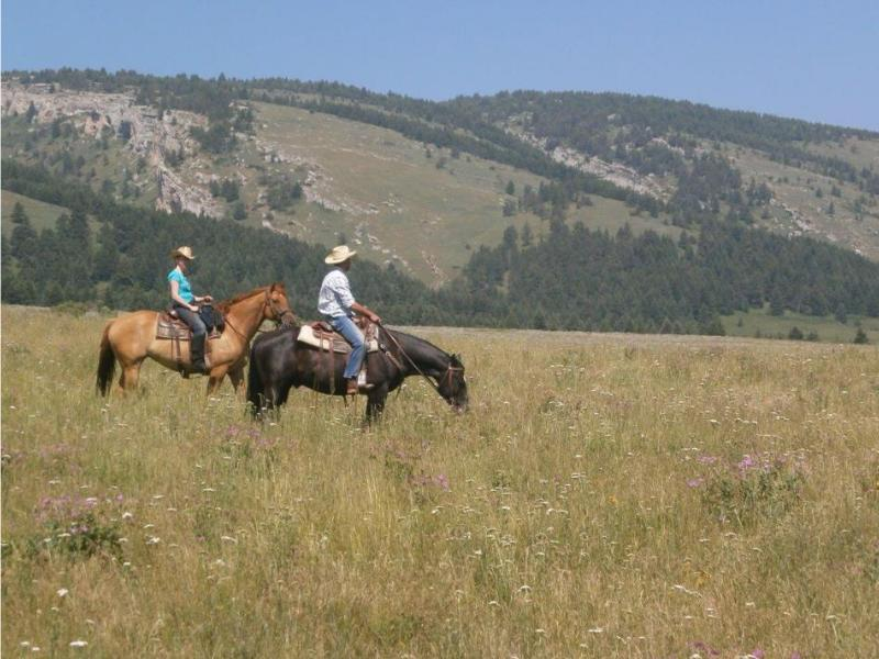 Lonesome Spur Ranch is a real working cattle ranch, where you are invited to participate in the day to day activities in beautiful Montana