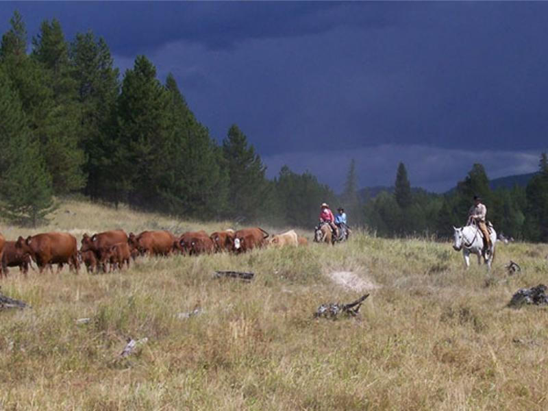 Northwest Montana's McGinnis Meadows Cattle & Guest Ranch.  Horseback riding & cattle drives are our main emphasis.