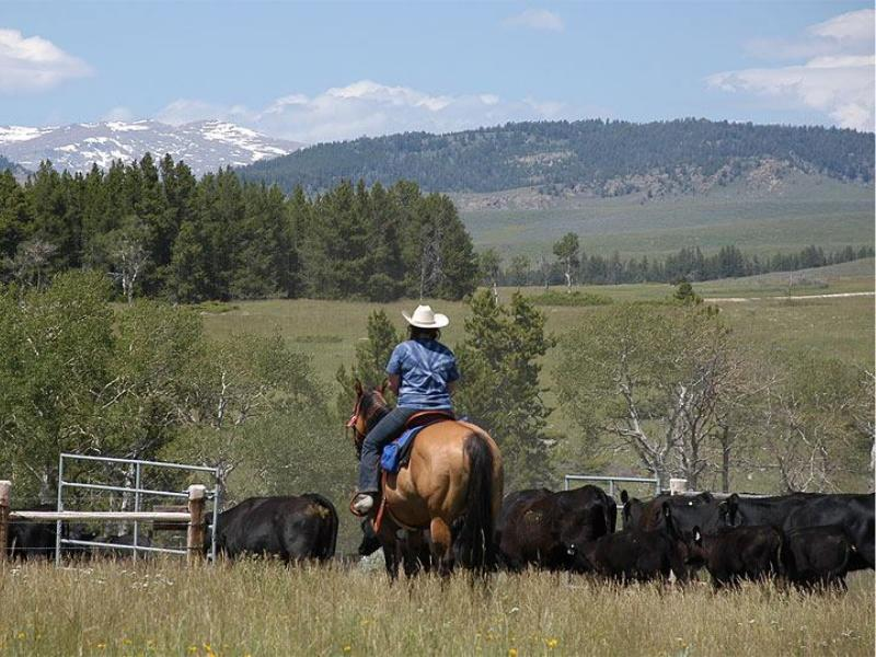 Red Reflet Ranch with its spectacular landscape make for great horseback riding in Ten Sleep, Wyoming