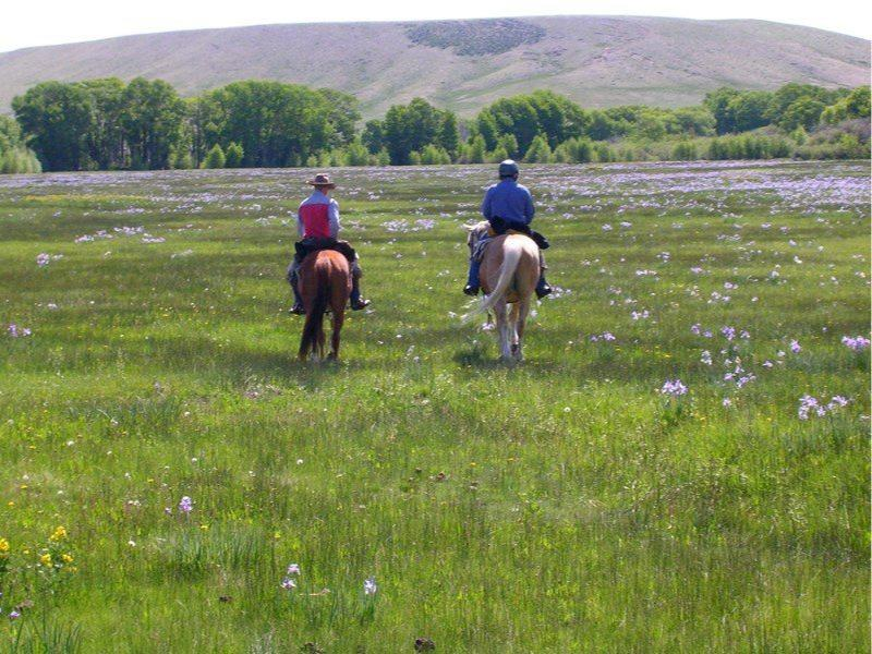 Vee Bar Guest Ranch Horseback riding in the beautiful Snowy Range Mountains of Wyoming