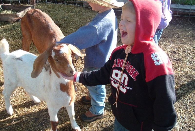 Petting Zoo at Elk Mountain Ranch in Buena Vista, Colorado