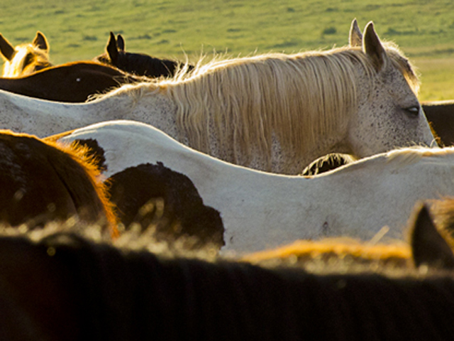 Great Horses at Latigo Ranch in Kremmling, Colorado